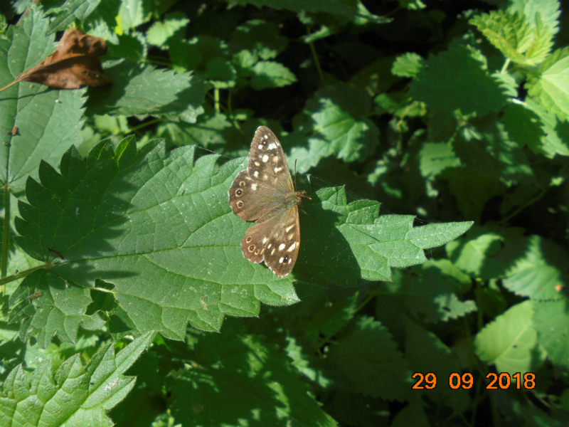Butterfly Conservation Hertfordshire and Middlesex