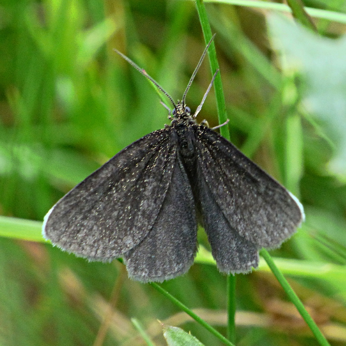 Chimney Sweeper Knebworth Park 15 Jun