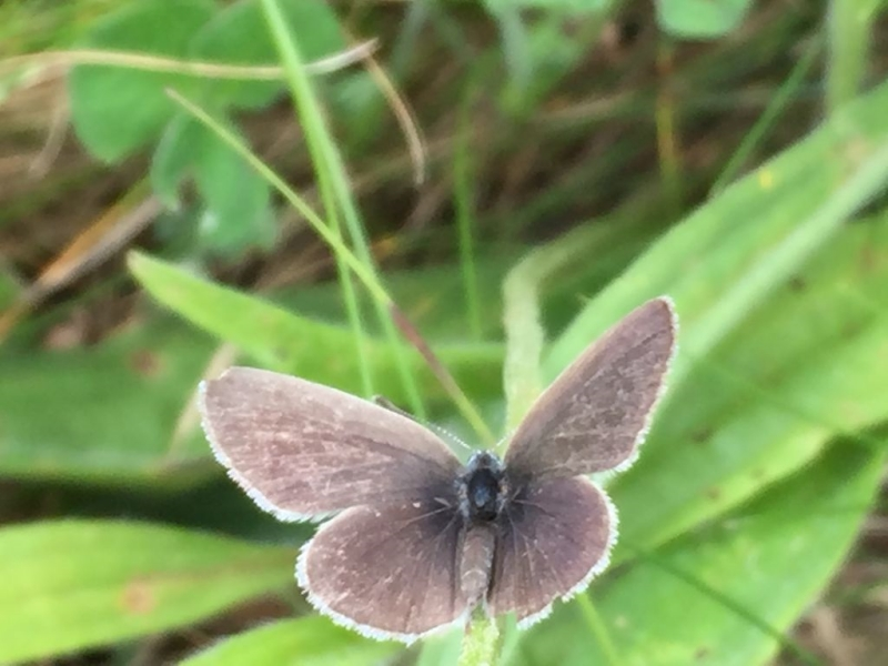 Small Blue Heartwood 30 Jun
