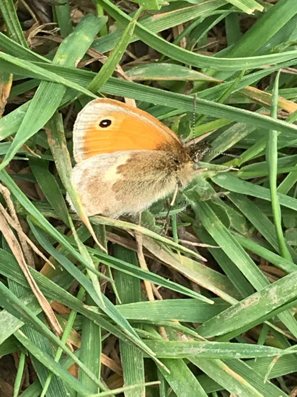 Small Heath Alexandra Palace 1 May