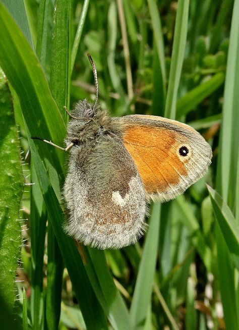 Small Heath Stanwell Moor 2 May