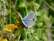Common Blue 2008 - Helen George