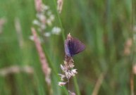 Unusual Common Blue 2001 - Andrew Middleton