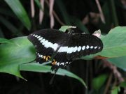 Papilio demolion 2006 - Richard Bigg